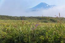 Авачинский вулкан в утреннем тумане