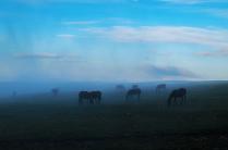 Лошадки в облаке