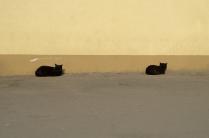 Городская кото-сиеста