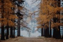Осень в Середниково