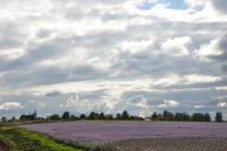 Фиолетовый ковёр