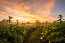 Утро в поле борещевиков