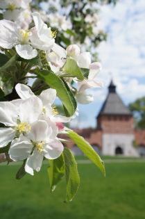 Мирная весна в Тульском кремле