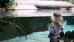 Девочка в океанариуме