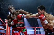 Бокс (Дмитрий Бивол - Феликс Валера)