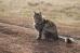 Деревенская кошка Дуся