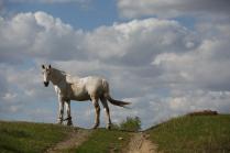 Конь и его бревно