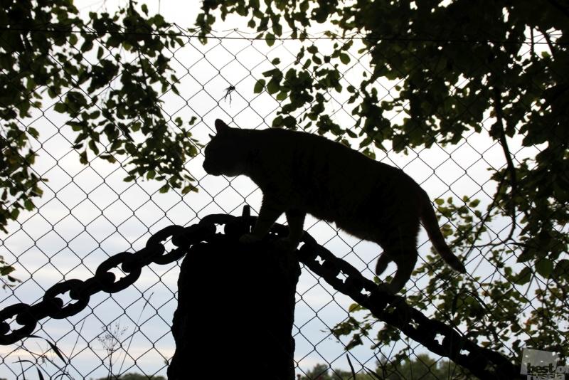 Кот учёный. Зоопарк сказок.
