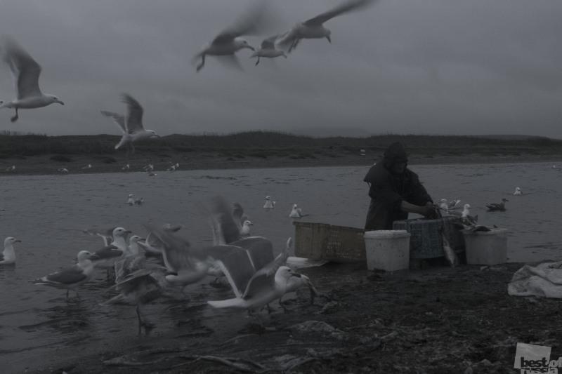 Чистильщик рыбы