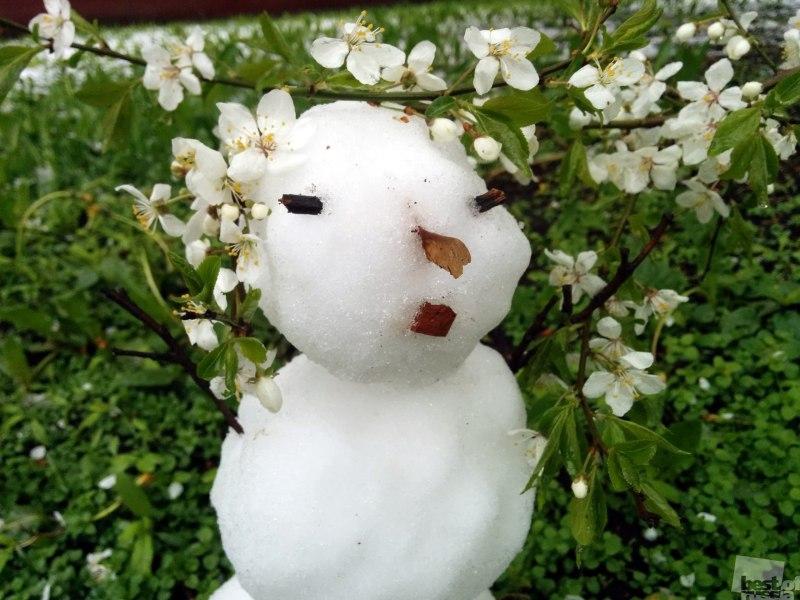 Московский майский снеговик