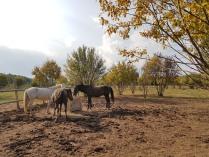 Утро коней