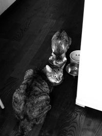Кошачья ненависть