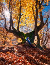 Дух леса и Мальчик