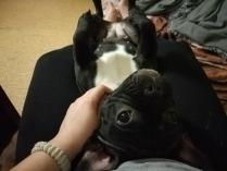 Собака-  верный друг!