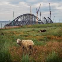 Баран и Керченский мост
