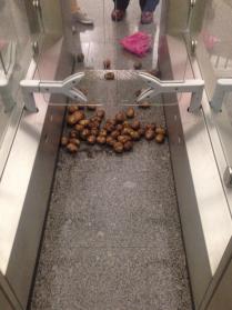 Картофельный клубни