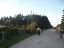 водитель велосипеда и пастух