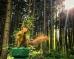 Белка в Битцевском лесу