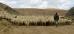 Пастух,стадо и его верный друг