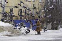 Кормите птиц