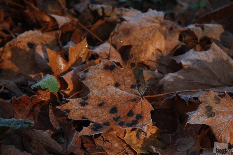 Хрустящая осень