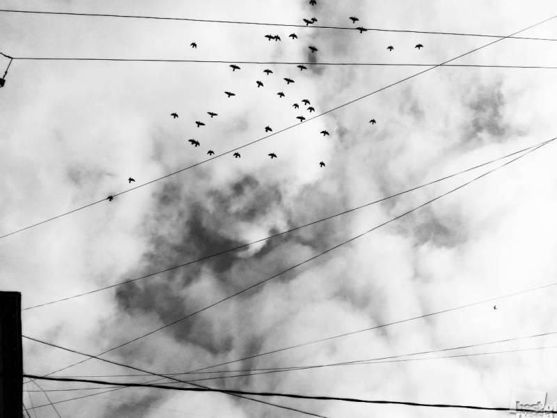 геометрия птиц