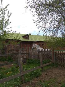 Яблочный конь