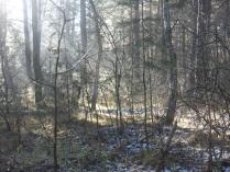 Ноябрьский лес