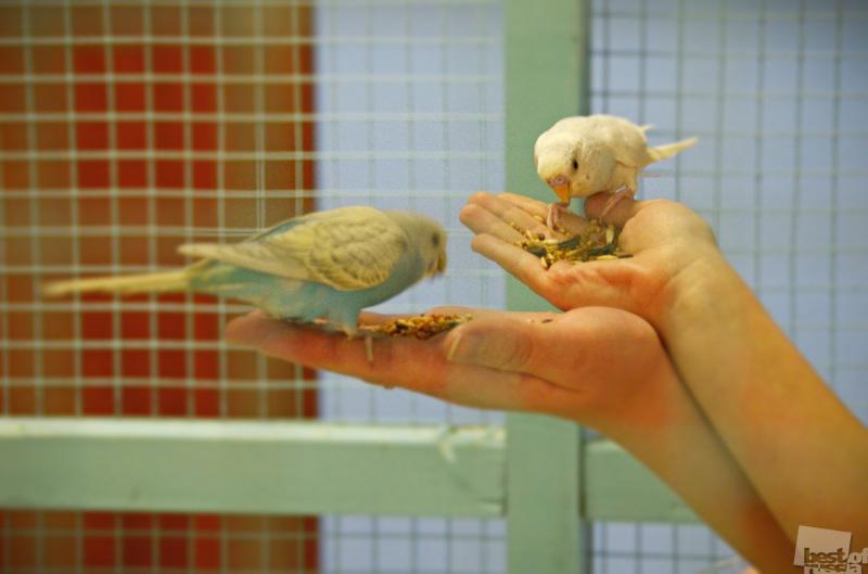 Кормление птиц в контактном зоопарке