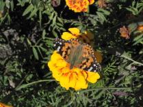 Бабочкин рай