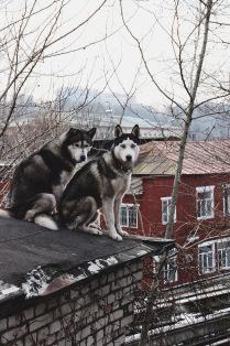 Сторожи крыши