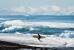 Суровый серфинг