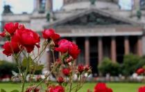 Цветочные грезы Петербурга