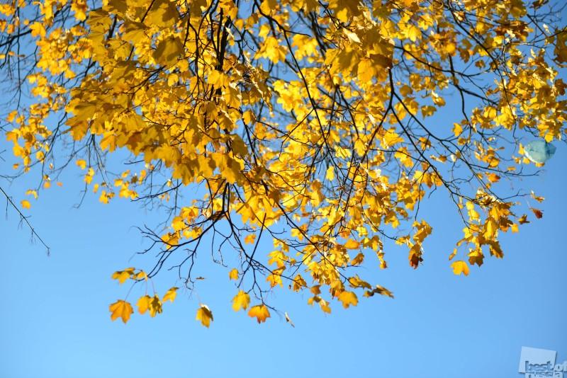 Калининградская осень
