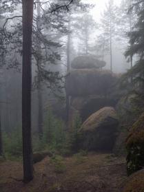 Таинственный лес...