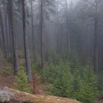 Лесная туманная картинка