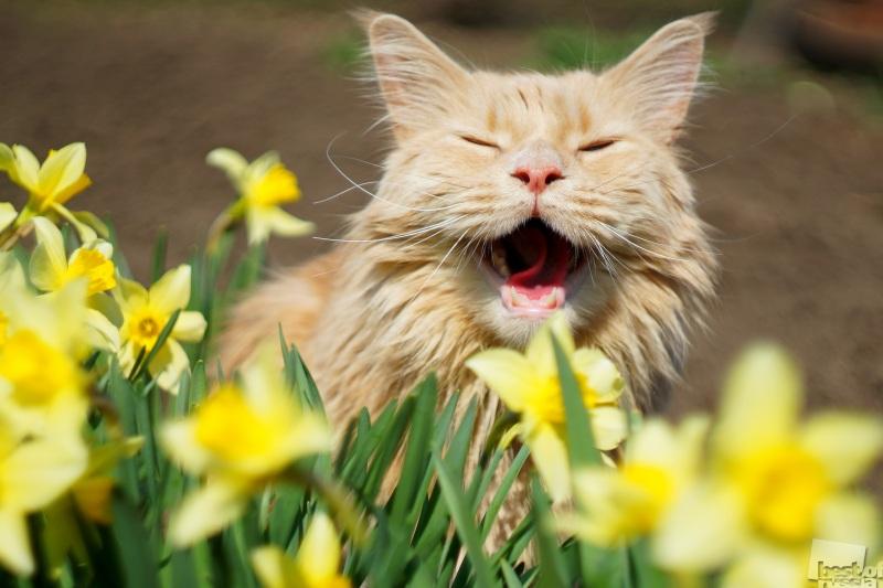 Весна!!!