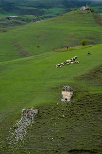Современный пастух