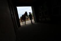 Центр иппотерапии на базе конного клуба Заря