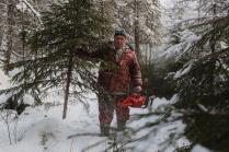 Заготовка елок к новому году