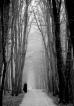 Одна среди высоких деревьев
