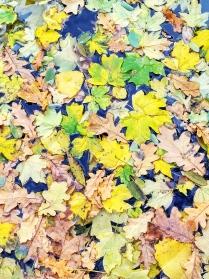 На ковре из желтых листьев....