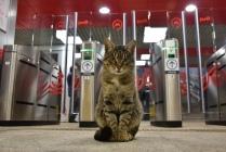 Начальник станции