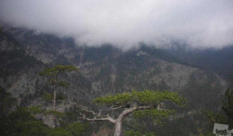 Деревья, гора и облака