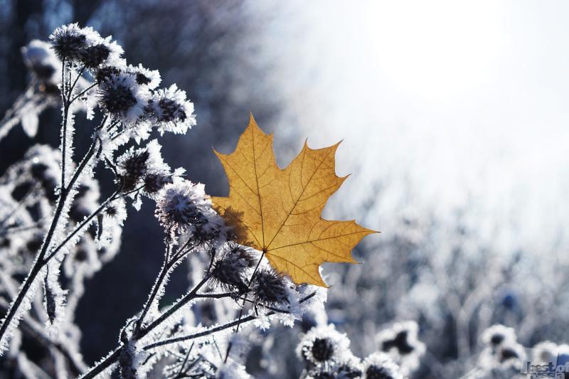 Немного осени зимою