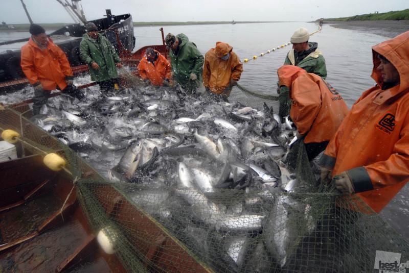 сельское хозяйство рыбная ловля