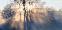 Морозным утром в Подмосковье