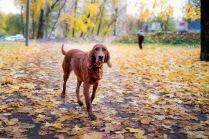 Осенний пёс