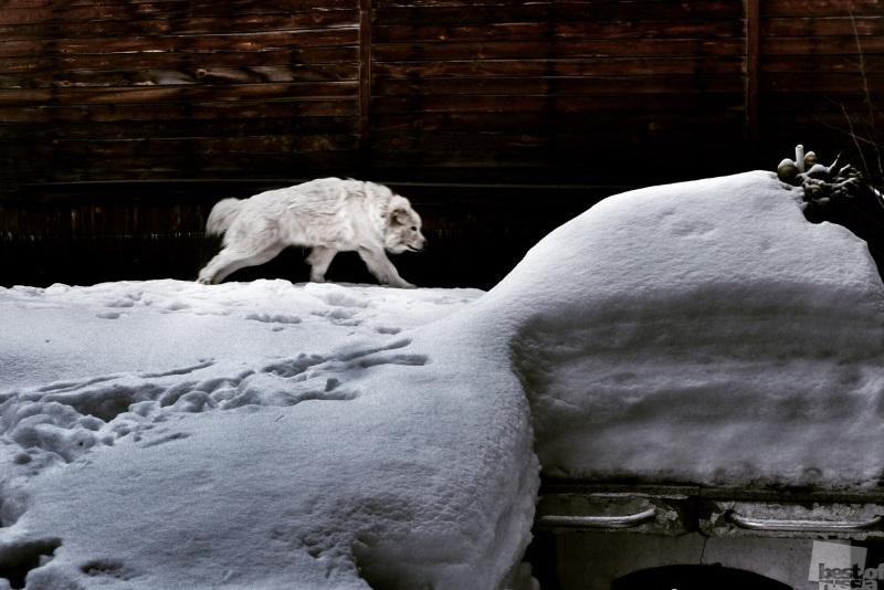 Бегущий пес