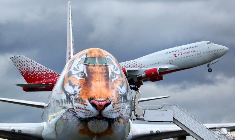 Возвращение тигра